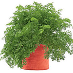 Carrot Grow Bag from Gardeners Supply Company