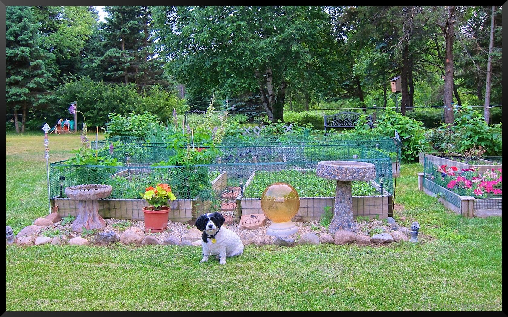 Vegetable gardening stephi gardens for Pretty raised vegetable garden