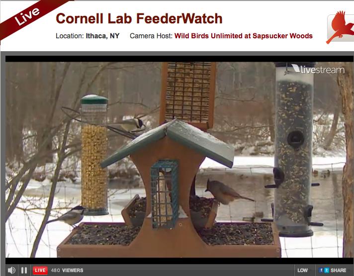 Cornell Lab FeederCam