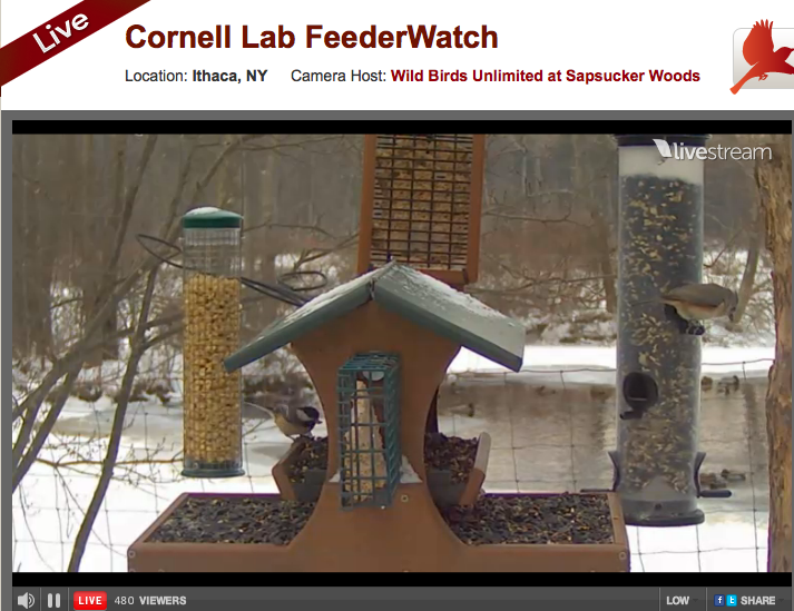 Cornell Lab Feederwatch
