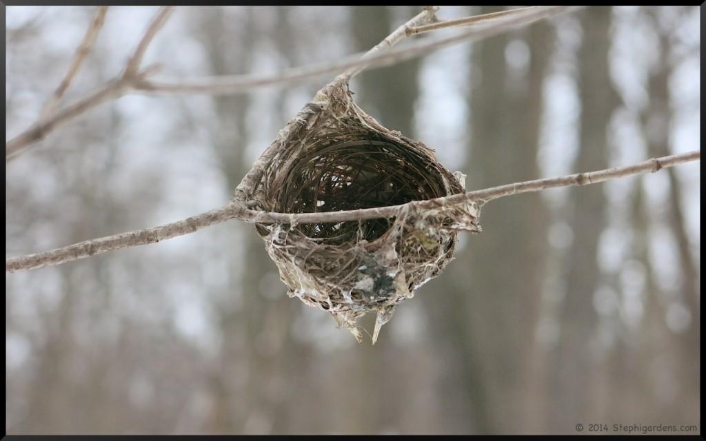 Morton Arboretum/Bird Nest