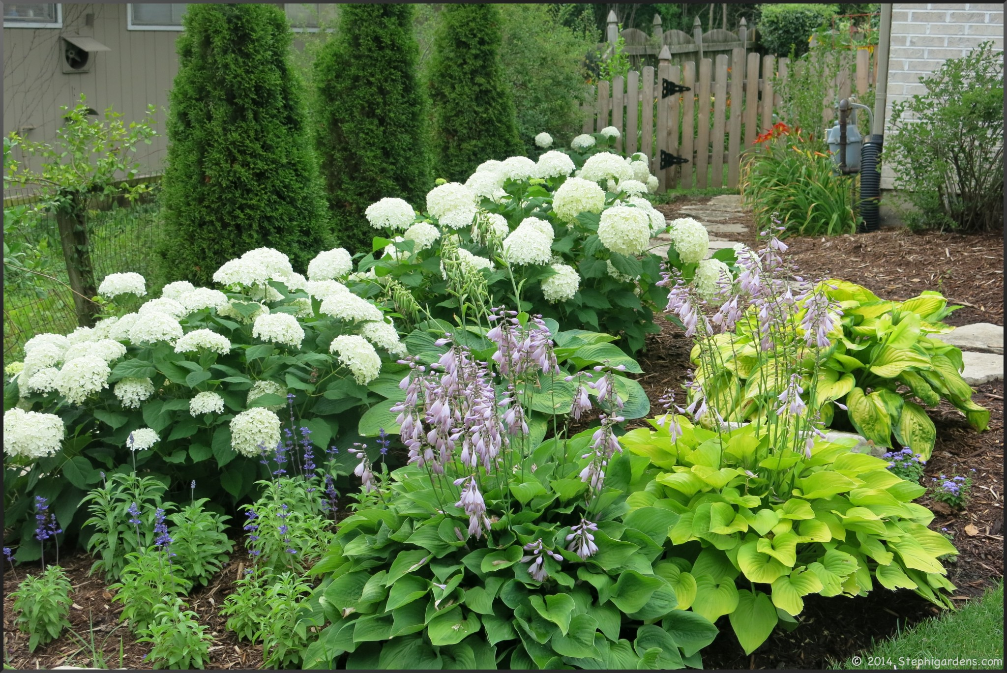 how to get annabelle hydrangeas to stand up