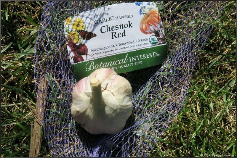 chesnok red garlic