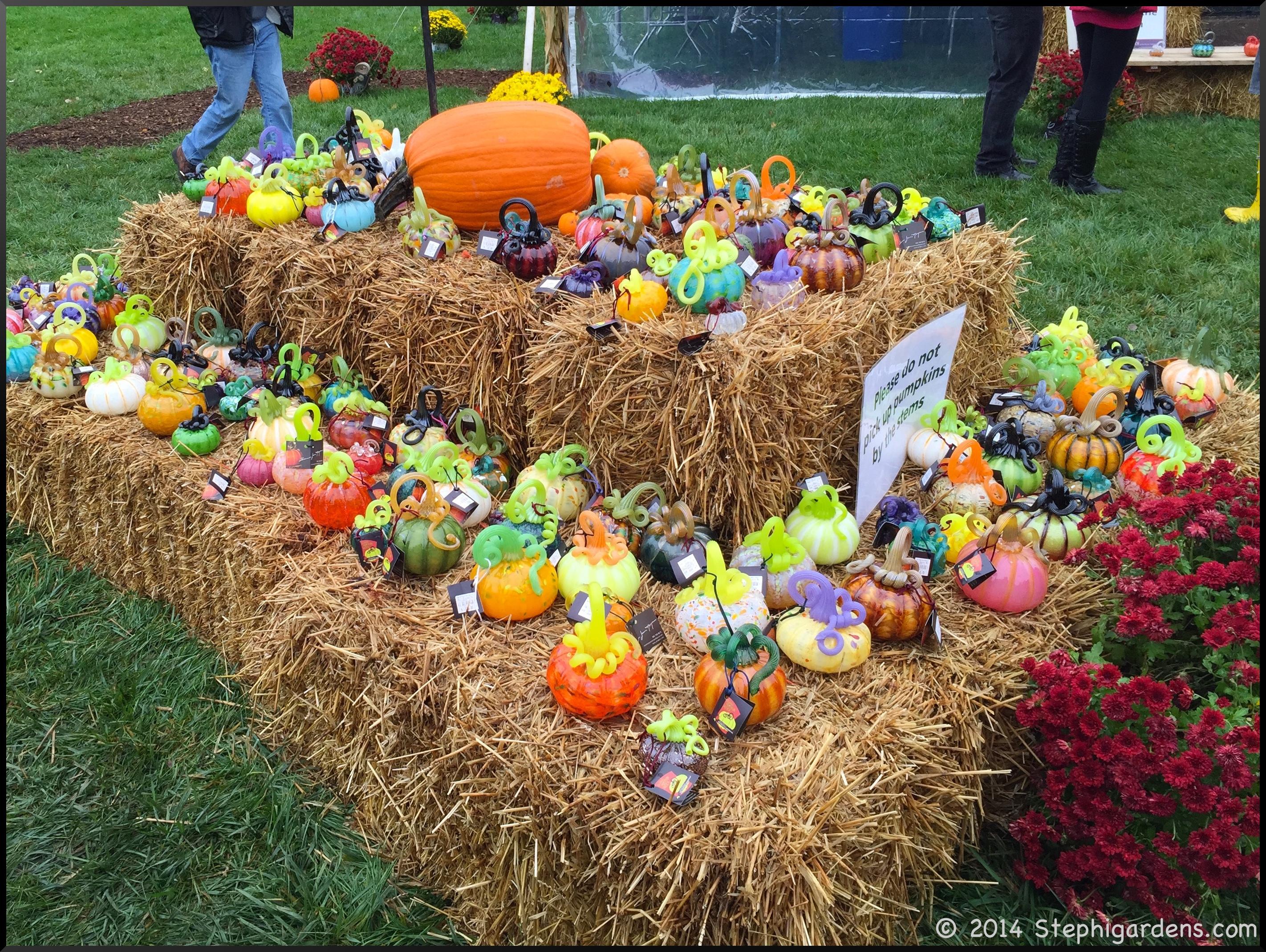 glass pumpkin patch – Stephi Gardens