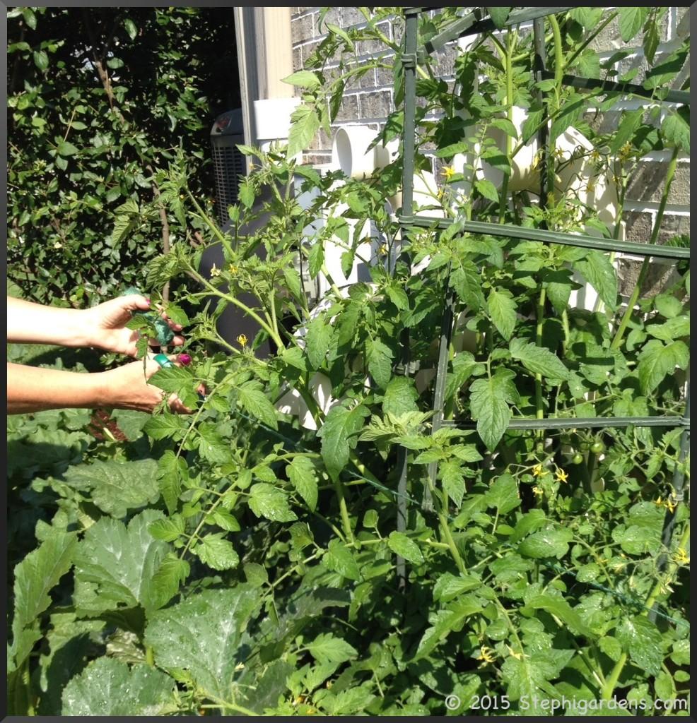 Blue Ribbon ® Ultomato Tomato Plant Cage