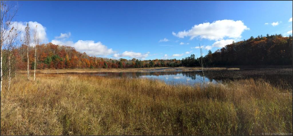 Fall in Wexford County, Michigan