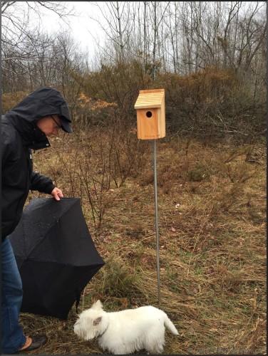 Eastern Bluebird Nest Box