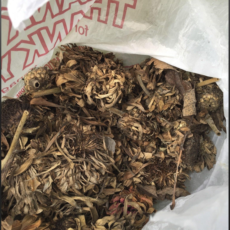 zinnia seed heads