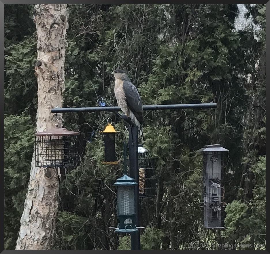 water unlimited outdoor birds pin feeders bird feeder pinterest